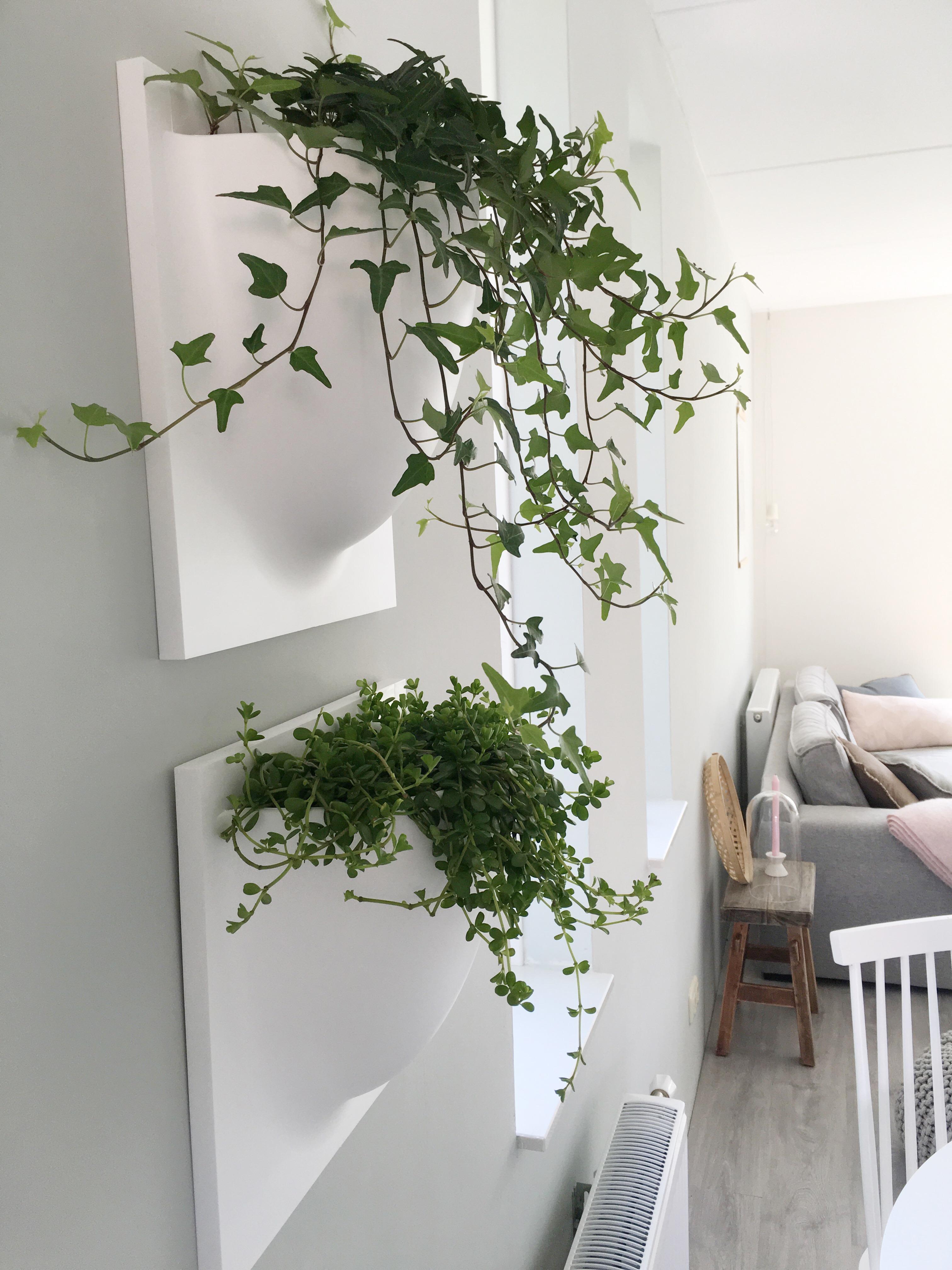 Een groene muur - Deco originele muur ...